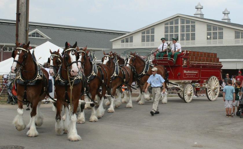 horses-717285_1920